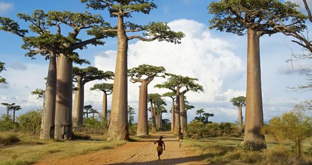 De l'inanité des élites politiques malgaches depuis l'indépendance et de leur volonté de mépriser et de tuer les aspirations de leur peuple : l'humiliation du peuple au quotidien  (4/5)