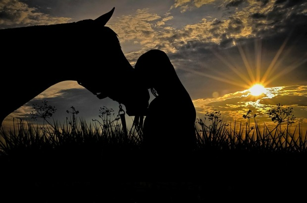 horse-2644695_960_720.jpg