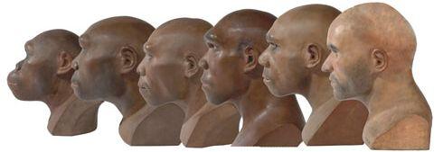 homo-sapiens-06_93334_1_naturalMuseum1.jpg