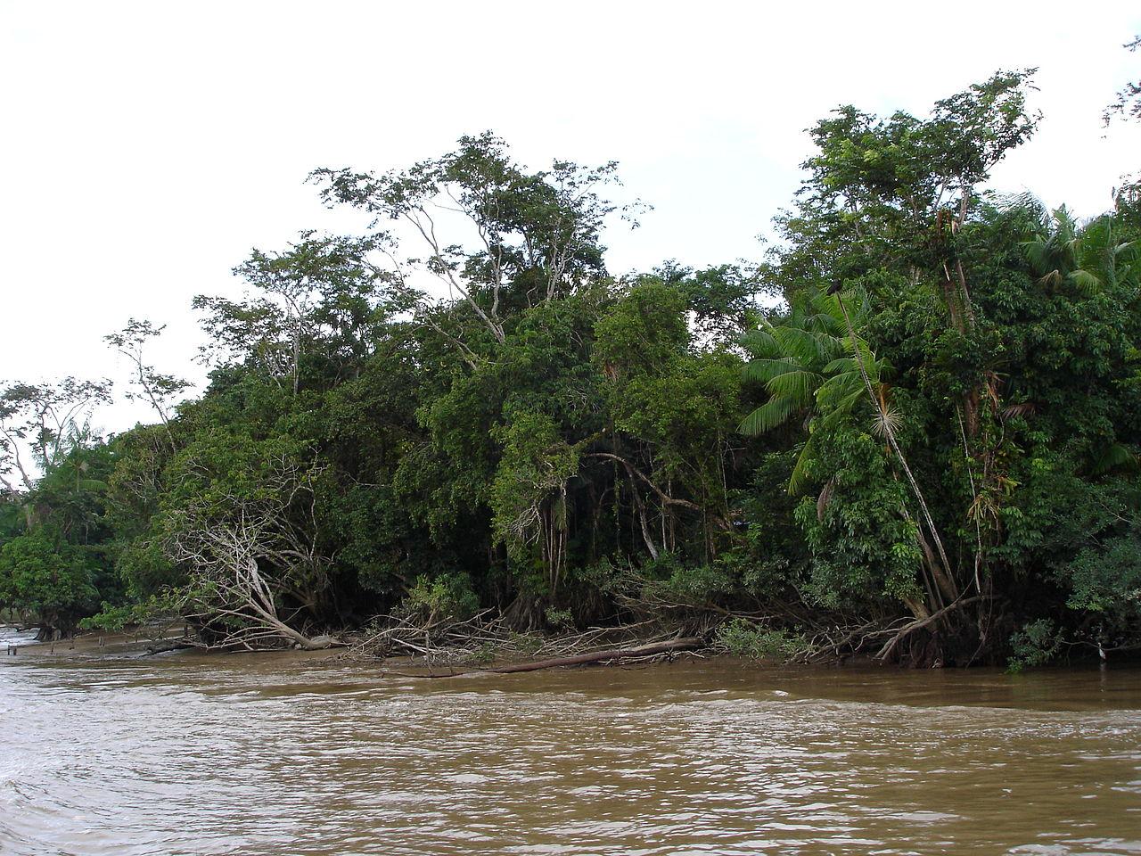 1280px-Amazon_river.jpg